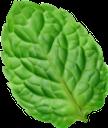 лист мяты, зеленый лист, мята, зеленый, leaf mint, green leaf, mint, green, blattminze, grünes blatt, minze, grün, feuille de menthe, feuille verte, menthe, vert, hoja de menta, hoja verde, foglia di menta, foglia verde, menta, hortelã da folha, folha verde, hortelã, verde, лист м'яти, зелений лист, м'ята, зелений