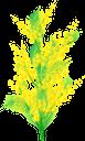 мимоза, желтые цветы, желтый, цветы, желтый цветок, весна, флора, yellow flowers, yellow, flowers, yellow flower, spring, mimose, gelbe blumen, gelb, blumen, gelbe blume, frühling, fleurs jaunes, jaune, fleurs, fleur jaune, printemps, flore, flores amarillas, amarillo, flor amarilla, fiori gialli, gialli, fiori, fiore giallo, mimosa, flores amarelas, amarelo, flores, flor amarela, primavera, flora, мімоза, жовті квіти, жовтий, квіти, жовта квітка