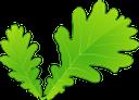 дуб, листья дуба, листья растений, зеленый лист, листок дерева, зеленый, oak, oak leaves, plant leaves, green leaf, leaf of tree, green, eiche, eichenblätter, pflanzenblätter, grünes blatt, blatt des baums, grün, chêne, feuilles de chêne, feuilles de plantes, feuille verte, feuille d'arbre, vert, roble, hojas de roble, hojas de plantas, hojas verdes, hojas de árboles, verdes, quercia, foglie di quercia, foglie di piante, foglia verde, foglia di albero, carvalho, folhas de carvalho, folhas de plantas, folha verde, folha de árvore, verde, листя дуба, листя рослин, зелений лист, зелений