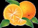 апельсин, цитрус, тропический плод, желтый, citrus, tropical fruit, yellow, zitrusfrüchte, tropische früchte, gelb, orange, agrumes, fruits tropicaux, jaune, naranja, cítricos, frutas tropicales, amarillo, arancio, agrumi, frutta tropicale, giallo, laranja, citrino, fruta tropical, amarelo, тропічний плід, жовтий