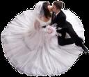 жених, невеста, букет невесты, свадьба, поцелуй, белое платье, свадебный букет, groom, bride, bridal bouquet, wedding, kiss, white dress, wedding bouquet, bräutigam, braut, hochzeit, kuss, weißes kleid, brautstrauß, marié, mariée, mariage, baiser, robe blanche, bouquet de mariée, novio, novia, boda, beso, vestido de blanco, ramo de novia, sposo, sposa, matrimonio, bacio, abito bianco, bouquet da sposa, noivo, noiva, buquê nupcial, casamento, beijo, vestido branco, buquê de noiva