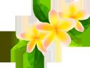 желтый цветок, цветы, зеленое растение, флора, yellow flower, flowers, green plant, gelbe blume, blumen, grüne pflanze, fleur jaune, fleurs, plante verte, flore, flor amarilla, fiore giallo, fiori, pianta verde, flor amarela, flores, planta verde, flora, жовта квітка, квіти, зелена рослина
