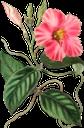 красный цветок, садовый цветок, цветы, садовые цветы, зеленое растение, red flower, флора, garden flower, flowers, garden flowers, green plant, rote blume, gartenblume, blumen, gartenblumen, grüne pflanze, natur, fleur rouge, природа, fleur de jardin, fleurs, fleurs de jardin, plante verte, nature, flore, flor roja, flor del jardín, flores del jardín, naturaleza, fiore rosso, fiore da giardino, fiori, fiori da giardino, pianta verde, natura, flor vermelha, flor de jardim, flores, flores de jardim, planta verde, natureza, flora, червона квітка, садова квітка, квіти, садові квіти, зелена рослина