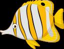 рыба бабочка, морская рыба, рыбы кораллового рифа, морская фауна, океанические рыбы, fish butterfly, sea fish, coral reef fish, marine fauna, ocean fish, fischschmetterling, seefisch, korallenrifffisch, meeresfauna, ozeanfisch, poisson papillon, poisson de récif corallien, faune marine, poisson de mer, pez mariposa, peces de arrecife de coral, peces de mar, pesce farfalla, pesce di mare, pesci barriera corallina, fauna marina, pesci oceanici, borboleta, mar, recife coral, peixe, fauna marinha, peixe oceano, риба метелик, морська риба, риби коралового рифу, морська фауна, океанічні риби