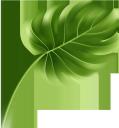 лист монстеры, лист тропической пальмы, зеленый лист, пальмовый лист, флора, листья, зеленый, monster leaf, leaf of tropical palm, green leaf, palm leaf, leaves, green, monsterblatt, blatt der tropischen palme, grünes blatt, palmblatt, blätter, grün, feuille de monstre, feuille de palmier tropical, feuille verte, feuille de palmier, flore, feuilles, vert, hoja de monstruo, hoja de palma tropical, hoja verde, hoja de palma, hojas, foglia di mostro, foglia di palma tropicale, foglia verde, foglia di palma, foglie, folha de monstro, folha de palmeira tropical, folha verde, folha de palmeira, flora, folhas, verde, лист монстери, лист тропічної пальми, зелений лист, пальмовий лист, листя, зелений