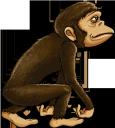 обезьяна, шимпанзе, животные, фауна, monkey, chimpanzee, animals, affe, schimpanse, tiere, singe, animaux, faune, mono, chimpancé, animales, scimmia, scimpanzé, animali, macaco, chimpanzé, animais, fauna, мавпа, тварини