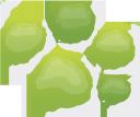 дерево вид сверху, лиственное дерево, природа, экология, флора, baumansicht von oben, laubbaum, ökologie, natur, arbre vue de dessus, arbre à feuilles caduques, écologie, nature, flore, vista de árbol desde arriba, árbol de hoja caduca, ecología, naturaleza, vista ad albero dall'alto, albero a foglie decidue, natura, vista de árvore de cima, árvore decídua, ecologia, natureza, flora, дерево вигляд зверху, листяне дерево, екологія