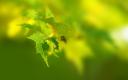 текстура природа, ветка растения, зеленый лист, texture nature, branch plants, green leaf, textur natur, pflanzen zweig, grünes blatt, nature texture, branche plantes, feuille verte, textura de la naturaleza, plantas de rama, hoja verde, tessitura natura, ramo piante, foglia verde, textura natureza, plantas ramo, folha verde, гілка рослини, зелений лист