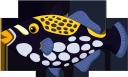 рыба спинорог, морская рыба, рыбы кораллового рифа, морская фауна, океанические рыбы, fish triggerfish, sea fish, coral reef fish, marine fauna, ocean fish, fisch drückerfisch, seefisch, korallenriff fisch, meeresfauna, meeresfisch, poisson-baliste, poisson de récif corallien, faune marine, poisson de mer, pez ballesta peces, peces de arrecife de coral, peces de mar, pesce balestra, pesci marini, pesci barriera corallina, fauna marina, pesci oceanici, peixe-porco, peixes do mar, peixes de recife de coral, fauna marinha, peixes do oceano, риба спинорог, морська риба, риби коралового рифу, морська фауна, океанічні риби