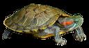 сухопутная черепаха, черепаха, черепаха сухопутная, панцирь черепахи, turtle, tortoise land, tortoiseshell, schildkröte, schildkröte land, schildpatt, tortue, terre de tortue, écaille de tortue, tortuga, tortuga de tierra, concha, terra tartaruga, tartaruga, terra de tartaruga, concha de tartaruga