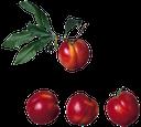 алыча, розовая слива, русская слива, спелая алыча, plum, pink plum, russian plum, ripe plum, pflaume, rosa pflaume, russisch pflaume, reife pflaumen, prune, prune rose, prune russe, prunes mûres, ciruela, ciruela rosa, ciruela ruso, ciruelas maduras, susina, susina rosa, prugna russo, prugne mature, ameixa, ameixa-de-rosa, ameixa russo, ameixas maduras