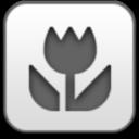 tulip, flower, photo, picture, image, тюльпан, цветок, фото, картинка, изображение