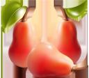 красная груша, спелая груша, плод дерева груши, груша, фрукты, red pear, ripe pear, fruit of pear tree, pear, rote birne, reife birne, die frucht eines birnbaum, birne, obst, poire rouge, poire mûre, le fruit d'un poirier, poire, fruit, pera roja, el fruto de un árbol de pera, fruta, rosso pera, pera matura, il frutto di un albero di pera, frutta, pera vermelha, pera madura, o fruto de uma árvore de pera, pera, fruto, червона груша, стигла груша, плід дерева груші, фрукти
