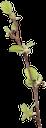 ветка дерева, зеленое растение, tree branch, green plant, baum zweig, grüne pflanze, branche d'arbre, plante verte, rama de árbol, ramo di albero, pianta verde, ramo de árvore, planta verde, гілка дерева, зелена рослина