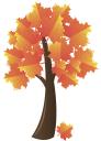 дерево, зеленое растение, клен, осенняя листва, желтые листья, осень, tree, green plant, maple, autumn foliage, yellow leaves, autumn, baum, grüne pflanze, ahorn, blätter im herbst, gelbe blätter, herbst, arbre, plante verte, érable, feuilles d'automne, les feuilles jaunes, automne, árbol, arce, hojas de otoño, las hojas amarillas, otoño, albero, pianta verde, acero, foglie di autunno, le foglie gialle, autunno, árvore, planta verde, bordo, folhas de outono, as folhas amarelas, outono, зелена рослина, осіннє листя, жовте листя, осінь