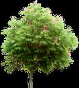 флора, лиственное дерево, зеленое растение, каштан, цветущее дерево, весна, deciduous tree, green plant, chestnut, blossom tree, spring, laubbaum, grüne pflanze, kastanie, blütenbaum, frühling, flore, arbre à feuilles caduques, plantes vertes, châtaignier, arbre de fleur, ressort, árbol de hoja caduca, castaño, árbol de la flor, la primavera, albero a foglie decidue, pianta verde, castagno, albero in fiore, flora, árvore de folha caduca, planta verde, castanha, árvore da flor, primavera