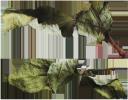 сухой лист, осень, зеленое растение, сухая ветка, сухий лист, осінь, зелена рослина, суха гілка, dry leaf, autumn, green plant, dry branch, trockenes blatt, herbst, grüne pflanze, trockener zweig, feuille sèche, automne, plante verte, branche sèche, hoja seca, otoño, rama seca, foglia secca, autunno, pianta verde, ramo secco, folha seca, outono, planta verde, ramo seco