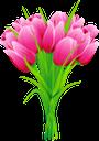 тюльпан, букет тюльпанов, цветы, букет цветов, тюльпаны, флора, tulip, bouquet of tulips, flowers, bouquet of flowers, tulips, tulpe, blumenstrauß von tulpen, blumen, blumenstrauß, tulpen, tulipe, bouquet de tulipes, fleurs, bouquet de fleurs, tulipes, flore, tulipán, ramo de tulipanes, ramo de flores, tulipanes, tulipano, bouquet di tulipani, fiori, bouquet di fiori, tulipani, tulipa, buquê de tulipas, flores, buquê de flores, tulipas, flora, букет тюльпанів, квіти, букет квітів, тюльпани