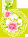 розовый цветок, цветы, зеленое растение, флора, pink flower, flowers, green plant, rosa blume, blumen, grüne pflanze, fleur rose, fleurs, plante verte, flore, fiore rosa, fiori, pianta verde, flor rosa, flores, planta verde, flora, рожева квітка, квіти, зелена рослина