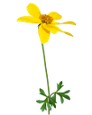 желтый цветок, зеленое растение, yellow flower, green plant, gelbe blume, grüne pflanze, fleur jaune, plante verte, flor amarilla, verde de plantas, fiore giallo, pianta verde, flor amarela, planta verde