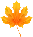 кленовый лист, осенние листья, желтый лист, осенняя листва, осень, maple leaf, autumn leaves, yellow leaf, autumn foliage, autumn, ahornblatt, gelbe blätter, herbstlaub, herbst, feuille d'érable, feuilles d'automne, feuilles jaunes, feuillage d'automne, automne, hoja de arce, hojas de otoño, hojas amarillas, follaje de otoño, otoño, foglia d'acero, foglie d'autunno, le foglie gialle, fogliame autunnale, autunno, folha de bordo, folhas de outono, folhas amarelas, outono folha, outono, кленовий лист, жовтий лист, осіннє листя, осінь