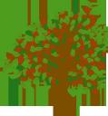 дерево, дерево вишня, лиственное дерево, зеленое растение, флора, tree, cherry tree, deciduous tree, green plant, baum, kirschbaum, laubbaum, grüne pflanze, arbre, cerisier, arbre à feuilles caduques, plante verte, flore, árbol, cerezo, caducifolio, albero, ciliegio, albero deciduo, pianta verde, árvore, cerejeira, árvore de folha caduca, planta verde, flora, листяне дерево, зелена рослина