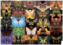 бабочка, разноусые чешуекрылые, butterfly, schmetterling, lepidoptera raznousye, papillon, lépidoptères raznousye, mariposa, lepidópteros raznousye, farfalla, raznousye lepidotteri, borboleta, raznousye lepidoptera