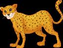 гепард, животные, фауна, cheetah, animals, gepard, tiere, guépard, animaux, faune, guepardo, animales, ghepardo, animali, chita, animais, fauna, тварини