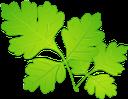 зеленый лист, листья растений, листок дерева, зеленый, green leaf, plant leaves, leaf of tree, green, grünes blatt, pflanzenblätter, blatt des baums, grün, feuille verte, feuilles de plante, feuille d'arbre, vert, hoja verde, hojas de la planta, hoja del árbol, foglia verde, foglie di pianta, foglia di albero, folha verde, folhas de plantas, folhas de árvore, verde, зелений лист, листя рослин, зелений