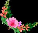 розовый цветок, цветы, флора, pink flower, flowers, rosa blume, blumen, fleur rose, fleurs, flore, fiore rosa, fiori, flor rosa, flores, flora, рожева квітка, квіти