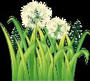белый цветок, трава, полевые цветы, флора, цветы, зеленая трава, white flower, field flowers, grass, flowers, green grass, weiße blume, feldblumen, gras, blumen, grünes gras, fleur blanche, fleurs de champ, herbe, flore, fleurs, herbe verte, flor blanca, hierba, hierba verde, fiore bianco, fiori di campo, erba, fiori, erba verde, flor branca, flores de campo, grama, flora, flores, grama verde, біла квітка, польові квіти, квіти, зелена трава