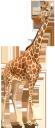 фауна, животные, жираф, animals, tiere, giraffe, faune, animaux, girafe, animales, jirafa, animali, giraffa, fauna, animais, girafa