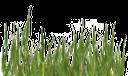 стебельки травы, зеленая трава, зеленое растение, green grass, green plant, grünes gras, grünpflanze, herbe verte, plante verte, hierba verde, erba verde, pianta verde, grama verde, planta verde