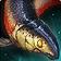 inv, misc, fish, 98