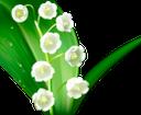 ландыш майский, ландыши, белый цветок, цветы, флора, lily of the valley may, lilies of the valley, white flower, flowers, maiglöckchen mai, maiglöckchen, weiße blume, blumen, muguet mai, lys de la vallée, fleur blanche, fleurs, flore, lirio de los valles mayo, lirios del valle, flor blanca, giglio della valle maggio, mughetti, fiori bianchi, fiori, lírio do vale maio, lírios do vale, flor branca, flores, flora, конвалія травнева, конвалії, біла квітка, квіти