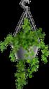 комнатные растения, вазон, зеленое растение, indoor plants, flowerpot, green plant, zimmerpflanzen, blumentopf, grünpflanze, plantes d'intérieur, pot de fleurs, plante verte, maceta, piante da interno, fioriera, pianta verde, plantas de interior, vaso de plantas, planta verde, кімнатні рослини, зелена рослина