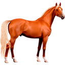 конь, скаковая лошадь, лошадь, скакун, породистая лошадь, конский волос, мустанг, racehorse, horse, thoroughbred horse, horse hair, rennpferd, pferd, vollblüter, pferdehaar, cheval de course, cheval, chevaux pur-sang, crin de cheval, caballo de carreras, caballo, caballos pura sangre, pelo de caballo, cavallo da corsa, cavallo, cavallo purosangue, crine di cavallo, cavalo de corrida, cavalo, cavalos puro-sangue, crina de cavalo, mustang