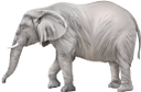 фауна, животные, слон, африканские животные, animals, elephant, african animals, tiere, elefanten, afrikanische tiere, faune, animaux, éléphants, animaux africains, animales, elefantes, animales africanos, animali, elefanti, animali africani, fauna, animais, elefante, animais africanos