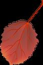 красный лист, осенние листья, осень, осенний лист, листок дерева, листопад, red leaf, autumn, autumn leaves, a leaf of a tree, a falling leaves, rotes blatt, herbst, herbstlaub, ein blatt eines baumes, fallende blätter, feuille rouge, automne, feuilles d'automne, une feuille d'arbre, une chute de feuilles, hoja roja, otoño, hojas de otoño, una hoja de un árbol, hojas que caen, foglia rossa, autunno, foglie autunnali, una foglia di un albero, foglie che cadono, folha vermelha, outono, folhas de outono, uma folha de uma árvore, uma folhas caindo, червоний лист, осіннє листя, осінь, осінній лист