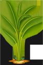 пальма, пальмовое дерево, тропическое дерево, зеленое растение, тропическое растение, дерево, palm tree, tropical tree, green plant, tropical plant, tree, palme, tropischer baum, grüne pflanzen, tropische pflanzen, bäume, paume, palmier, arbre tropical, plantes vertes, plantes tropicales, les arbres, palmera, árbol tropical, las plantas verdes, plantas tropicales, árboles, albero tropicale, piante verdi, piante tropicali, alberi, palma, palmeira, árvore tropical, plantas verdes, plantas tropicais, árvores, пальмове дерево, тропічне дерево, зелена рослина, тропічна рослина
