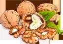 грецкий орех, долька ореха, орехи, walnut, nuts, walnuss, nüsse, noix, nuez, nueces, noce, noci, noz, nozes, волоський горіх, часточка горіха, горіхи