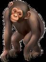 фауна, животные, обезьяна шимпанзе, animals, monkey chimpanzee, tiere, affen schimpanse, faune, animaux, singe chimpanzé, animales, mono del chimpancé, animali, scimpanzé scimmia, fauna, animais, chimpanzé macaco