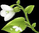 подснежники, белые цветы, подснежник, цветы, белый цветок, первоцвет, весна, флора, white flowers, flowers, white flower, spring, primrose, weiße blumen, schneeglöckchen, blumen, weiße blume, frühling, primel, fleurs blanches, perce-neige, fleurs, fleur blanche, printemps, primevère, flore, campanillas de invierno, flores blancas, galanthus, flor blanca, fiori bianchi, bucaneve, fiori, fiore bianco, primula, snowdrops, flores brancas, snowdrop, flores, flor branca, primavera, prímula, flora, проліски, білі квіти, пролісок, квіти, біла квітка, першоцвіт