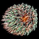 огонь png, пламя, фейерверк, fire png, flame, fireworks, gruß, png feuer, flammen, feuerwerk, salute, feu, flammes .png, feux d'artifice, saludo, fuego png, llamas, fuegos artificiales, saluto, png fuoco, fiamme, fuochi d'artificio, saudação, png fogo, chamas, fogos de artifício, салют, вогонь png, полум'я, феєрверк