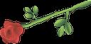 цветок розы, красная роза, зеленое растение, любовь, флора, красный, rose flower, red rose, green plant, love, red, rose blume, rote rose, grüne pflanze, liebe, rot, rose, rose rouge, vert, plante, amour, flore, rouge, rosa roja, rojo, fiore rosa, rosa rossa, pianta verde, amore, rosso, rosa, rosa vermelha, planta verde, amor, flora, vermelho, квітка троянди, червона троянда, зелена рослина, любов, червоний