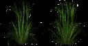 кусты зеленой травы, зеленая трава, зеленое растение, green grass, green plant, grünes gras, grünpflanze, herbe verte, plante verte, hierba verde, erba verde, pianta verde, grama verde, planta verde
