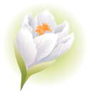 крокус, белый цветок, цветы, флора, white flower, flowers, krokus, weiße blume, blumen, crocus, fleur blanche, fleurs, flore, azafrán, flor blanca, croco, fiore bianco, fiori, açafrão, flor branca, flores, flora, біла квітка, квіти