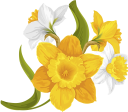 цветок нарцисса, желтый цветок, нарцисс, белый нарцисс, букет цветов, цветы, флора, желтый, daffodil flower, yellow flower, daffodil, white daffodil, bouquet of flowers, flowers, yellow, narzissenblume, gelbe blume, narzisse, weiße narzisse, blumenstrauß, blumen, gelb, fleur de jonquille, fleur jaune, jonquille, jonquille blanche, bouquet de fleurs, fleurs, flore, jaune, flor de narciso, flor amarilla, narciso blanco, ramo de flores, amarillo, fiore di giunchiglia, fiore giallo, giunchiglia, giunchiglia bianca, mazzo di fiori, fiori, giallo, flor narciso, flor amarela, narciso, narciso branco, buquê de flores, flores, flora, amarelo, квітка нарциса, жовта квітка, нарцис, білий нарцис, букет квітів, квіти, жовтий