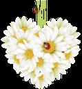 ромашка полевая, chamomile field, ромашка польова, цветы, божья коровка, цветочное сердце, любовь, букет цветов, квіти, сонечко, квіткове серце, любов, букет квітів, flowers, ladybug, flower heart, love, bunch of flowers, daisy-feld, blumen, marienkäfer, blume herz, liebe, ein blumenstrauß, pâquerette, fleurs, coccinelle, coeur de fleur, l'amour, un bouquet de fleurs, campo de margaritas, mariquita, flor de corazón, el amor, un ramo de flores, margherita di campo, fiori, coccinella, cuore fiore, amore, un mazzo di fiori, campo da margarida, flores, joaninha, coração flor, amor, um buquê de flores