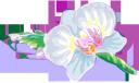 белый цветок, цветы, флора, white flower, flowers, weiße blume, blumen, fleur blanche, fleurs, flore, flor blanca, fiore bianco, fiori, flor branca, flores, flora, біла квітка, квіти